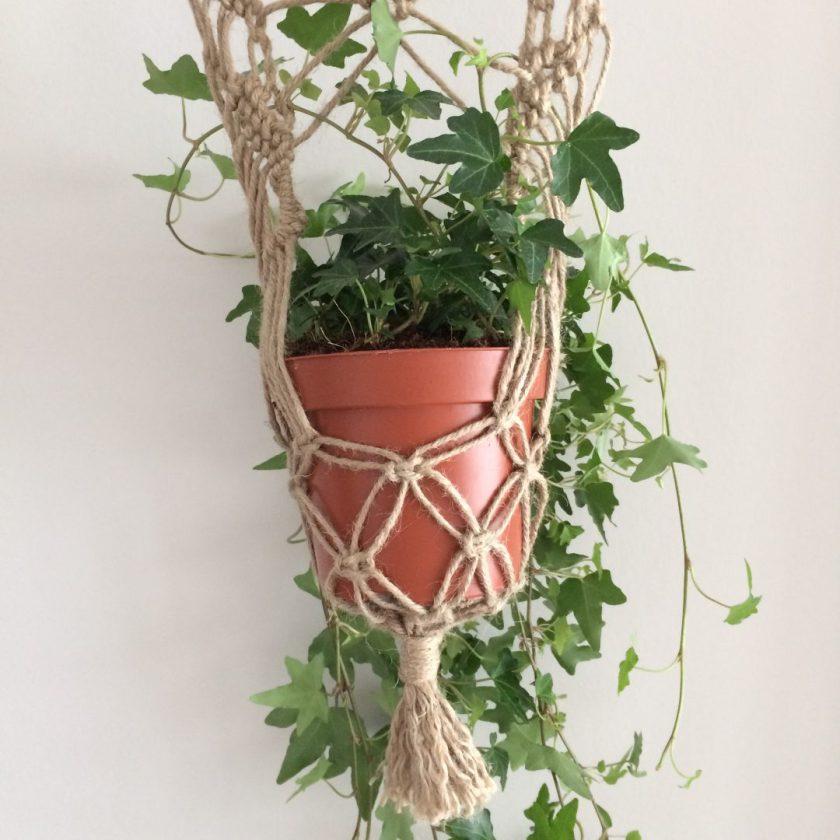 Muur Plant (1)