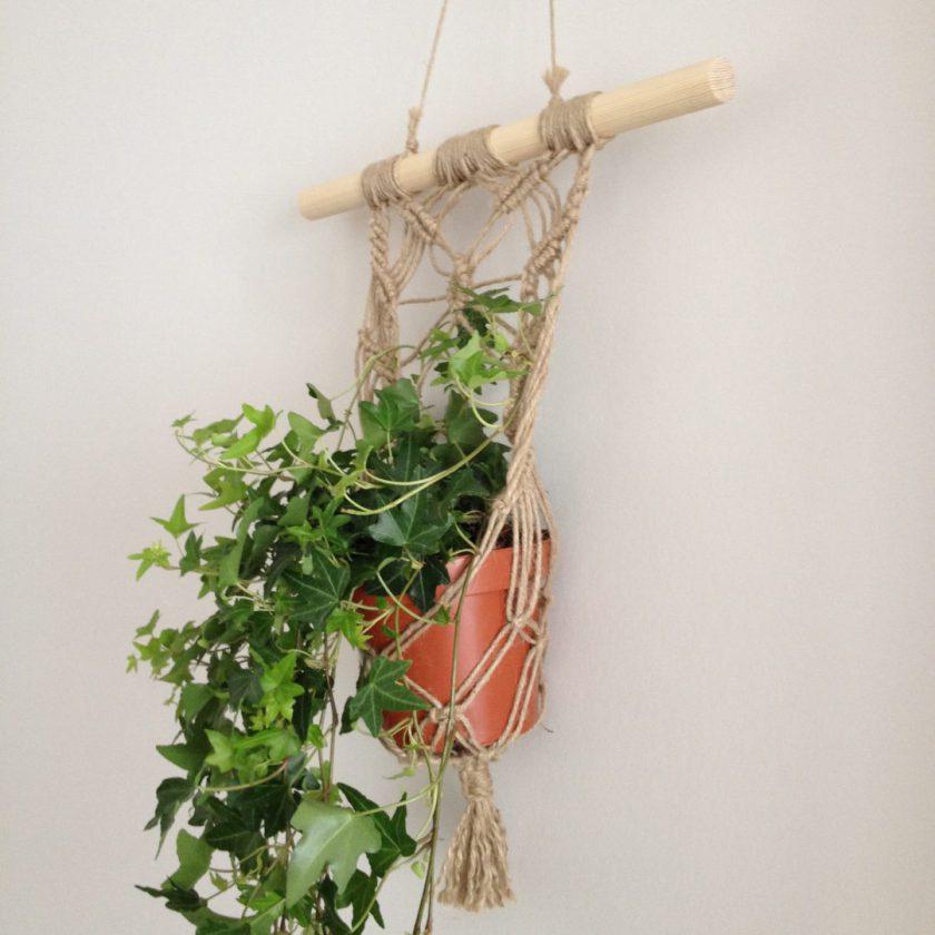Muur Plant (3)
