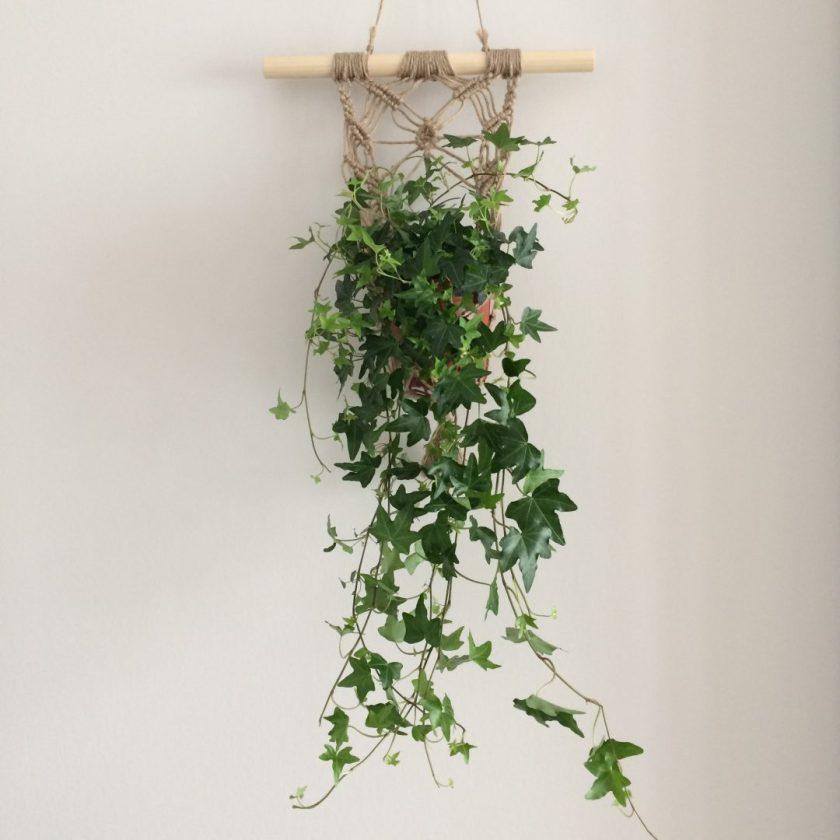 Muur Plant (6)