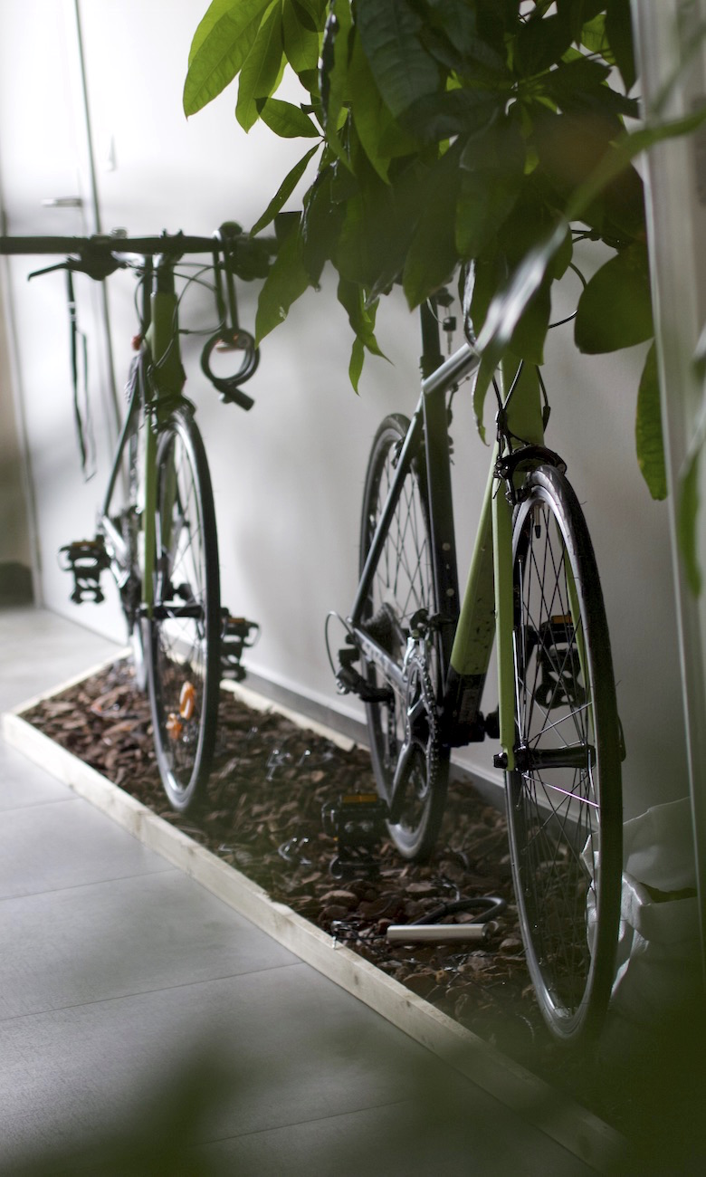 bicycle-forest